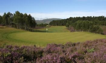 Ginster am 7. Loch auf dem Spey Valley Golf Course